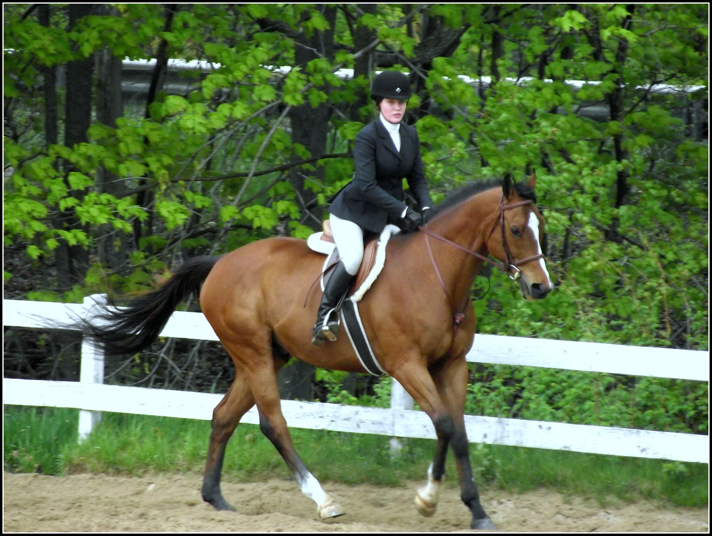 Holiday Acres Equestrian Center 187 2019 Schedule Amp Shows